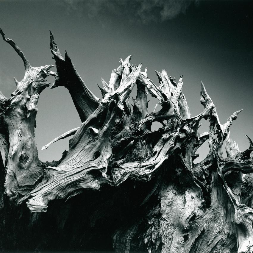 #V Tree Roots Detail copy