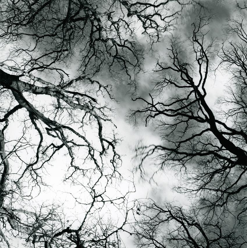 #XXIX Treescape